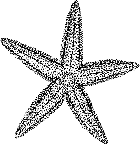 Starfish clipart #6, Download drawings