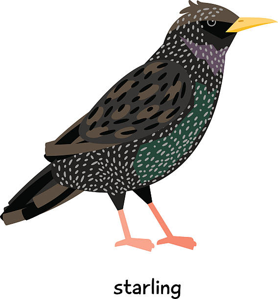 Starling clipart #4, Download drawings