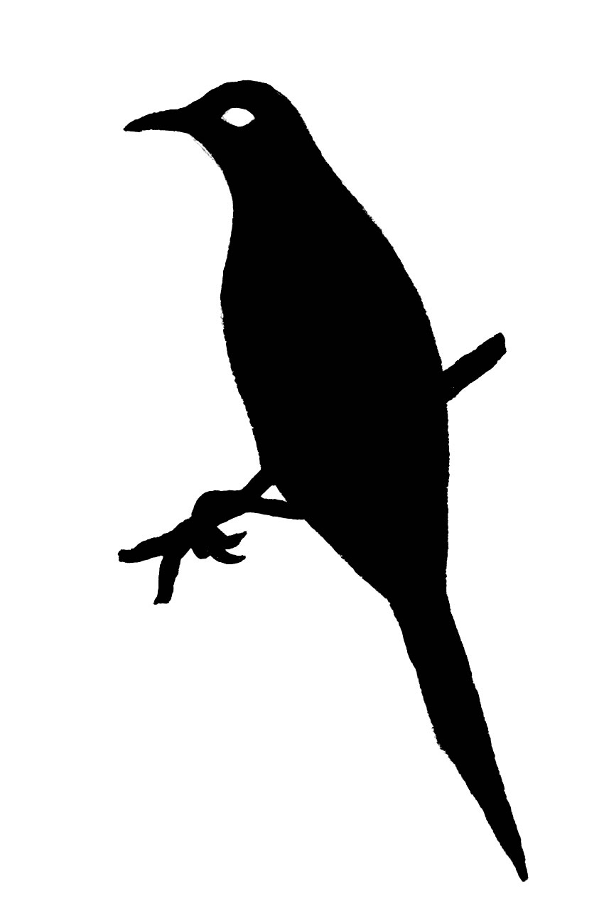 Starling clipart #6, Download drawings