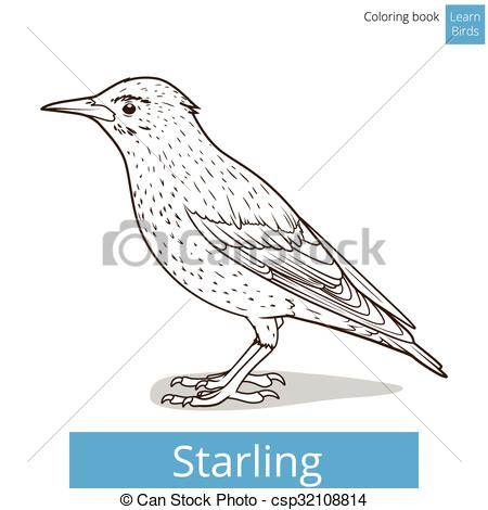 Starling clipart #12, Download drawings