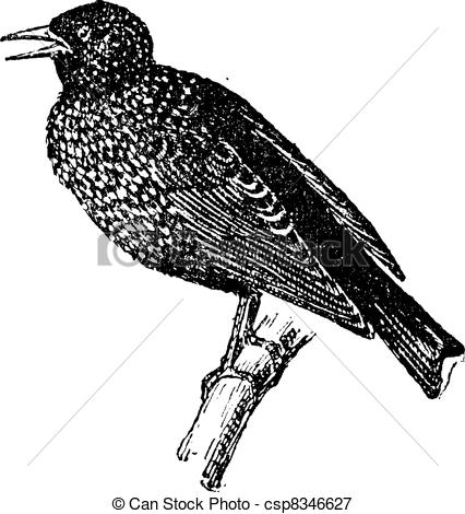 Starling clipart #10, Download drawings