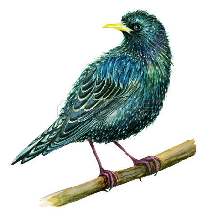 Starling clipart #20, Download drawings