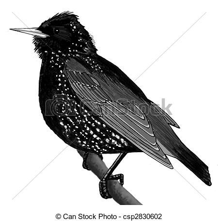 Starling clipart #16, Download drawings