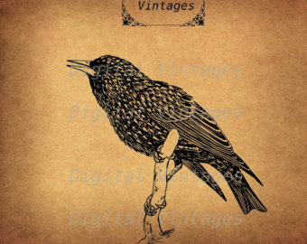 Starling svg #14, Download drawings