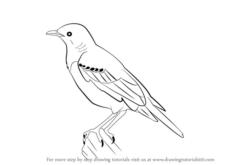 Starling svg #3, Download drawings