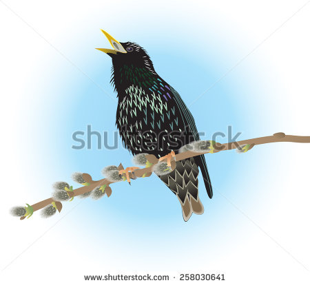 Starling svg #9, Download drawings