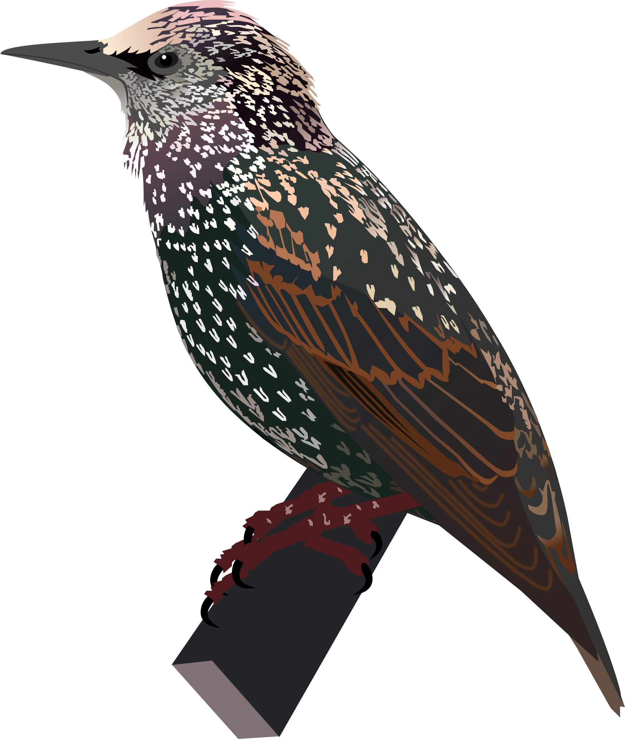 Starling svg #17, Download drawings