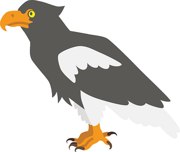 Steller's Sea Eagle clipart #9, Download drawings