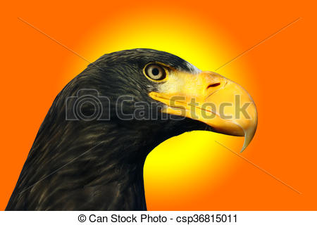 Steller's Sea Eagle clipart #15, Download drawings