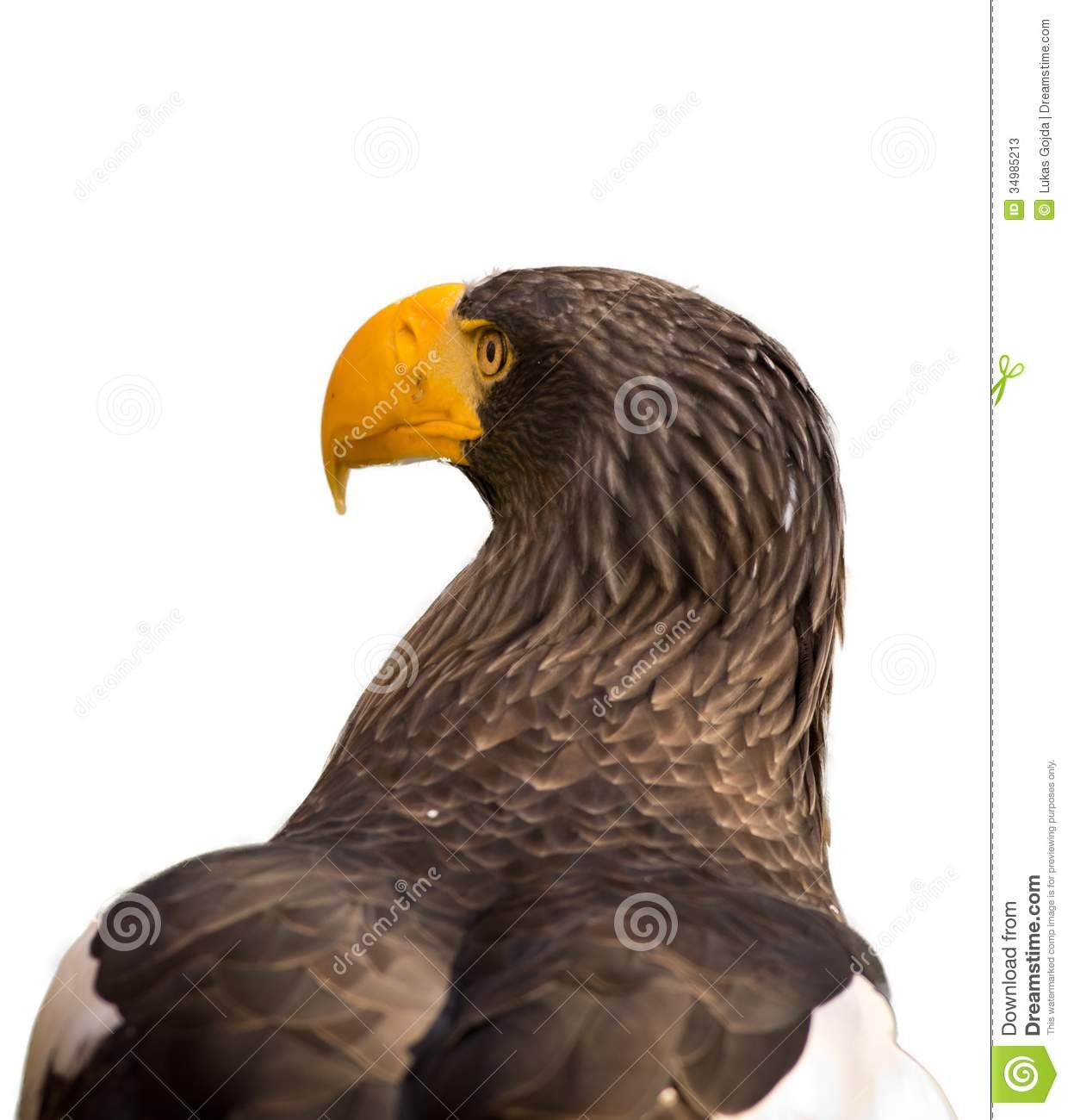 Steller's Sea Eagle clipart #6, Download drawings