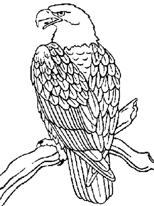 Steller's Sea Eagle coloring #20, Download drawings