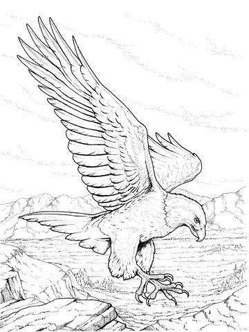 Steller's Sea Eagle coloring #9, Download drawings