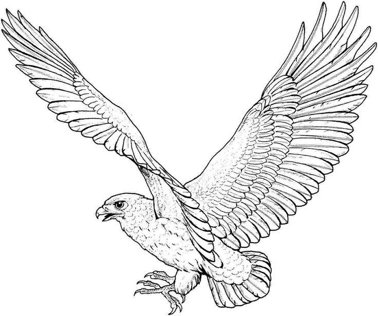Steller's Sea Eagle coloring #8, Download drawings