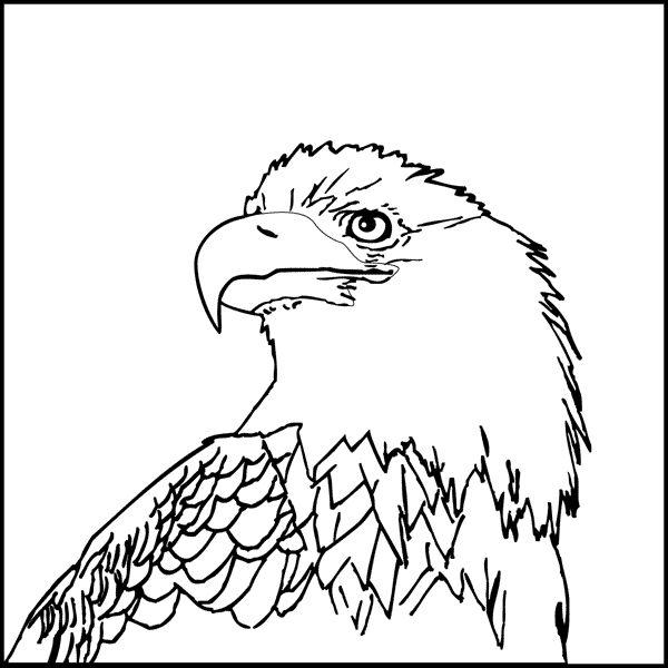Steller's Sea Eagle coloring #7, Download drawings