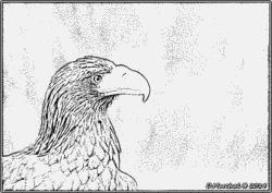 Steller's Sea Eagle coloring #5, Download drawings