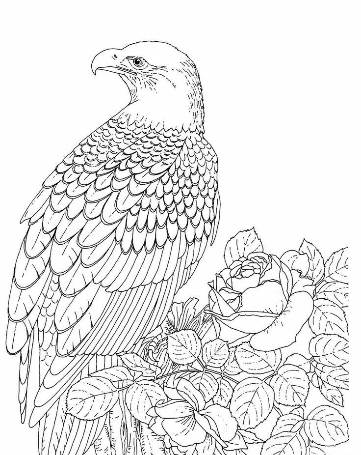 Steller's Sea Eagle coloring #4, Download drawings