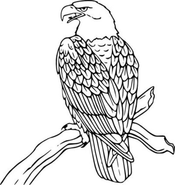 Steller's Sea Eagle coloring #1, Download drawings