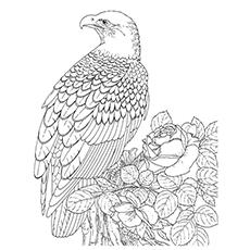 Steller's Sea Eagle coloring #11, Download drawings