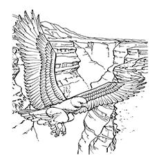 Steller's Sea Eagle coloring #19, Download drawings
