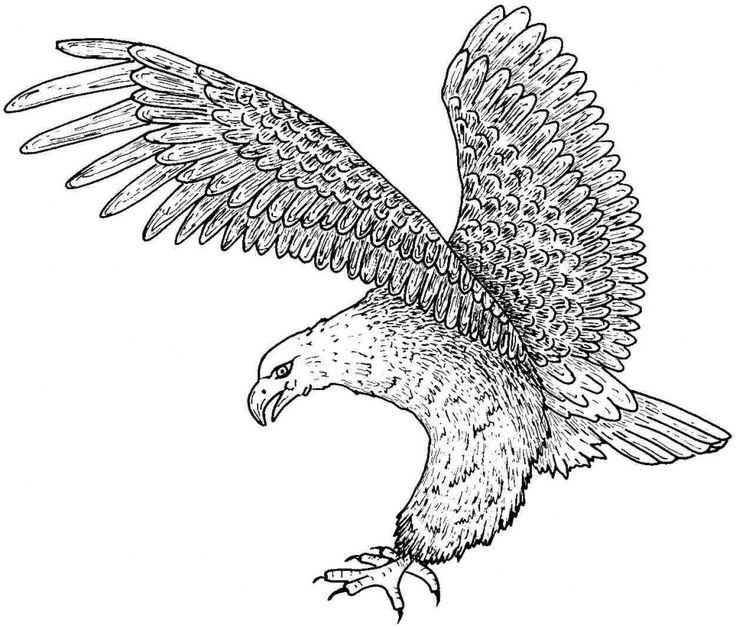 Steller's Sea Eagle coloring #10, Download drawings