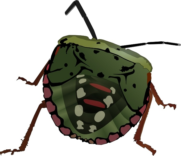 Stink Bug clipart #18, Download drawings