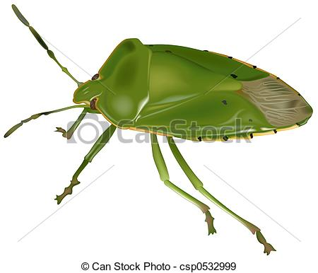 Stink Bug clipart #14, Download drawings