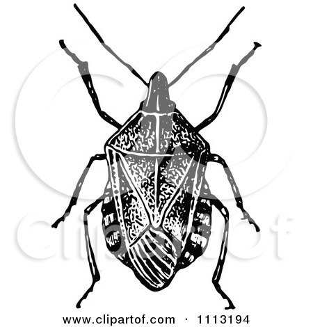 Stink Bug clipart #12, Download drawings