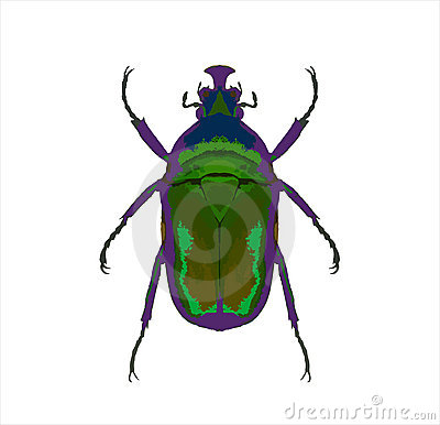 Stink Bug clipart #9, Download drawings