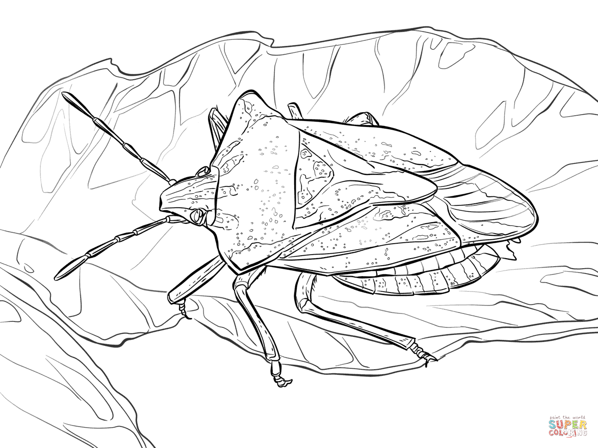 Stink Bug coloring #9, Download drawings