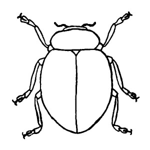 Stink Bug coloring #11, Download drawings