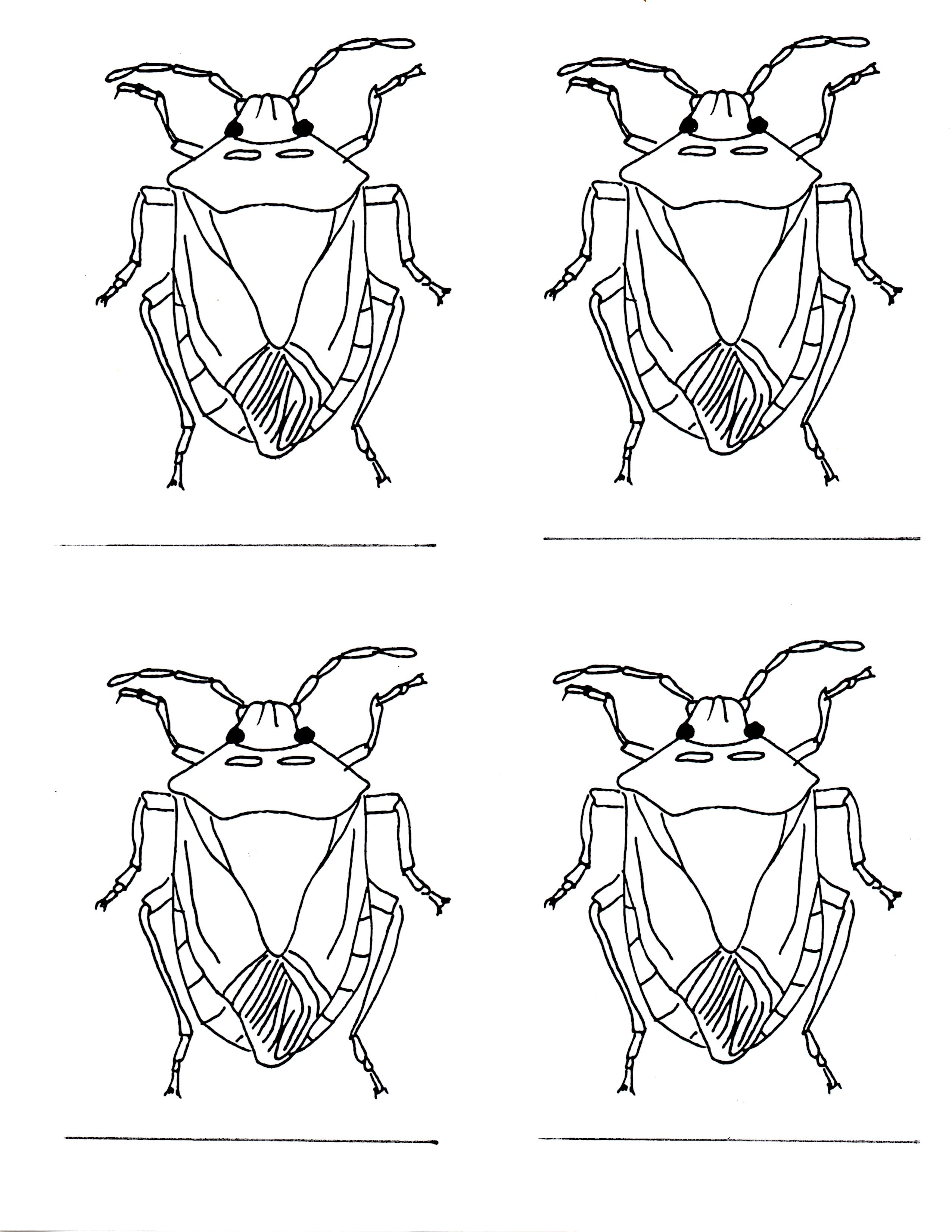 Stink Bug coloring #19, Download drawings