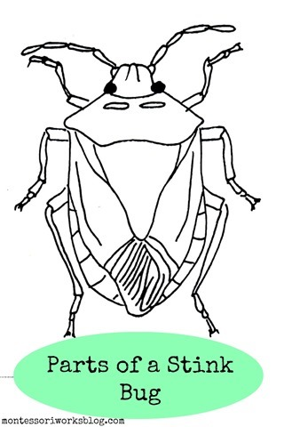 Stink Bug coloring #3, Download drawings