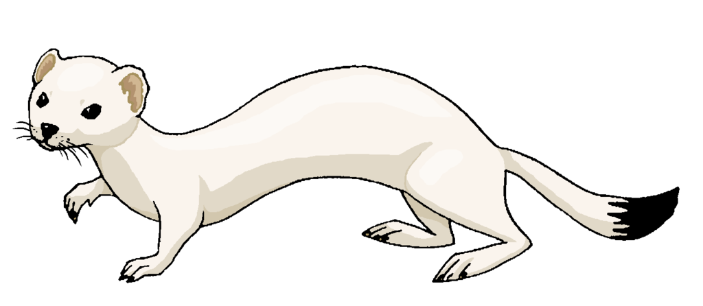 Stoat clipart #12, Download drawings
