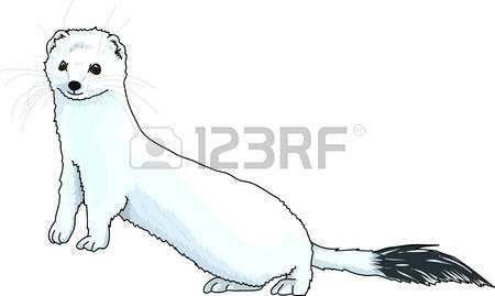 Stoat clipart #8, Download drawings