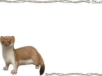 The Stoat clipart #1, Download drawings