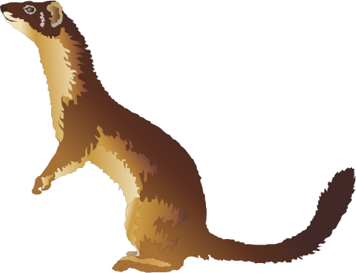 The Stoat clipart #7, Download drawings