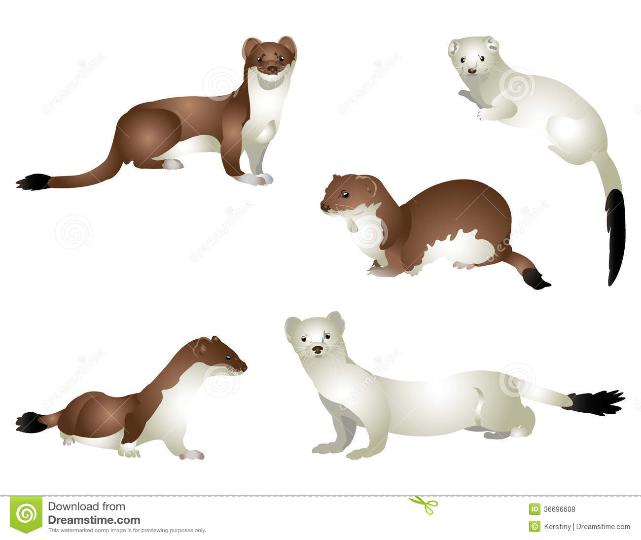 The Stoat clipart #5, Download drawings
