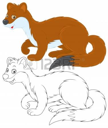 Stoat coloring #9, Download drawings