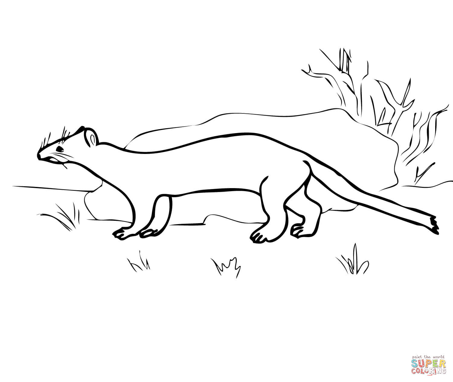 Stoat coloring #14, Download drawings