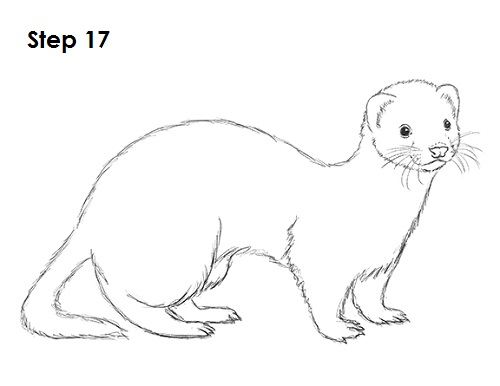 The Stoat svg #14, Download drawings