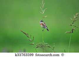 Stonechat clipart #20, Download drawings