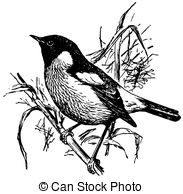 Stonechat clipart #9, Download drawings