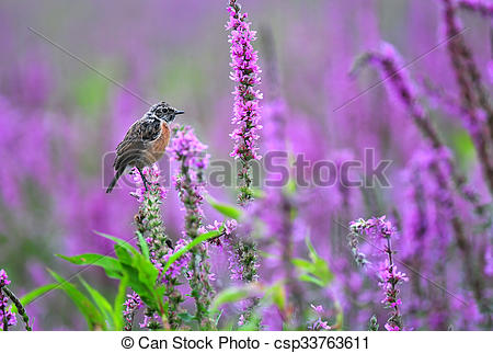 Stonechat clipart #14, Download drawings