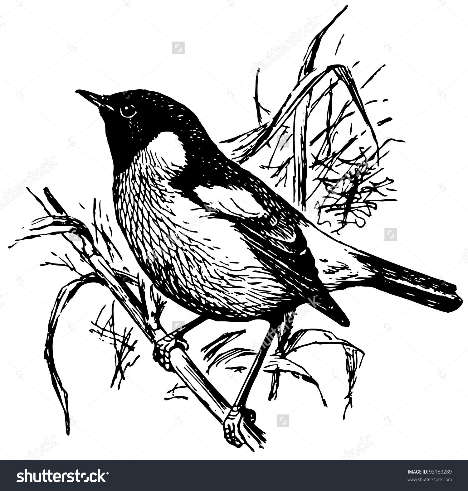 Stonechat coloring #4, Download drawings