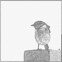 Stonechat coloring #5, Download drawings