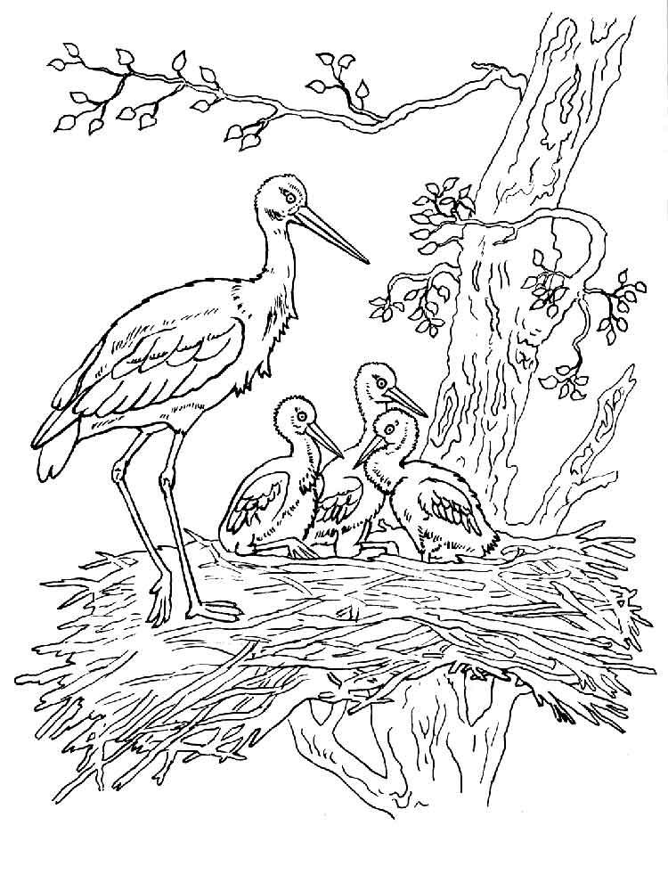 Stork coloring #6, Download drawings