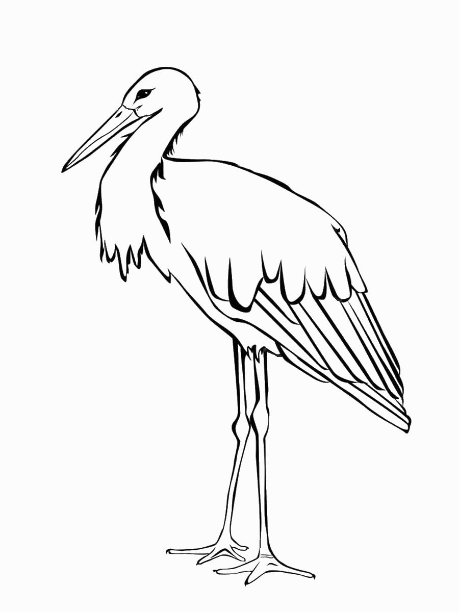 Stork coloring #3, Download drawings