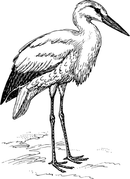 White Stork svg #18, Download drawings