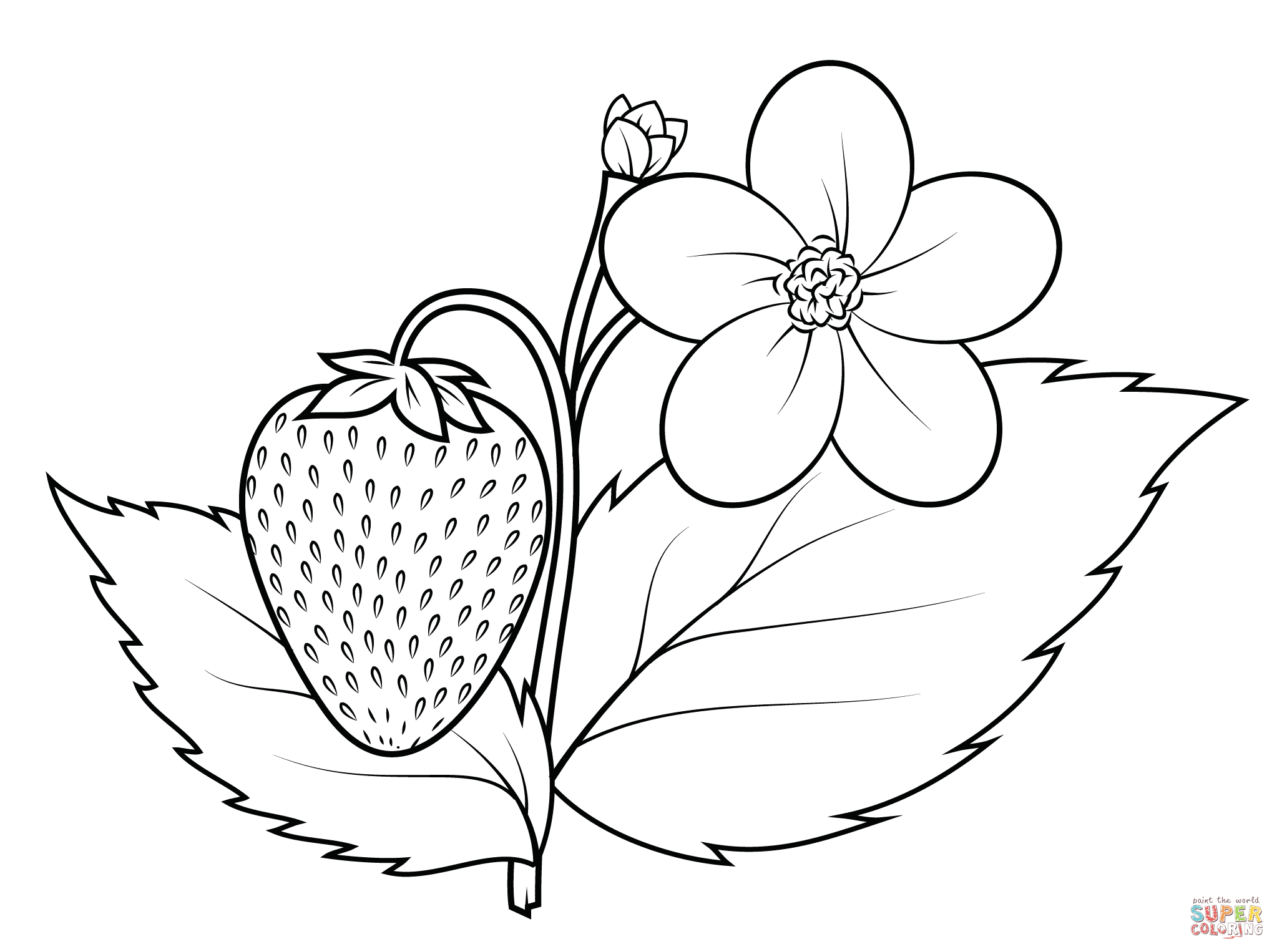 Strawberry coloring #8, Download drawings