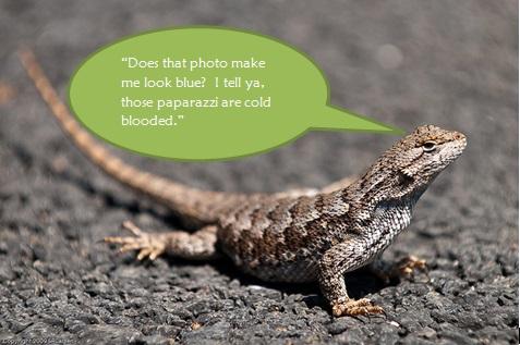 Striped Plateau Lizard clipart #12, Download drawings